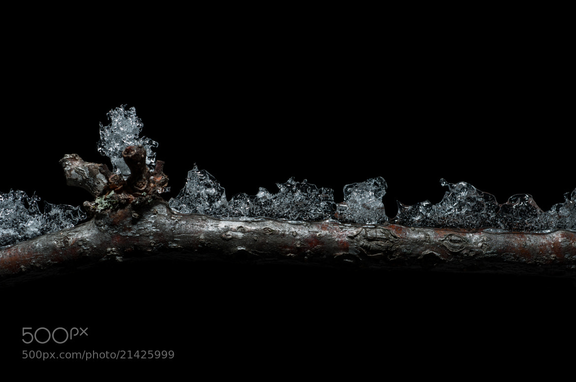 Photograph Ice on Branch #2 by Frozen Canuck on 500px