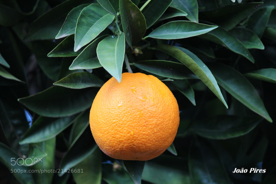 Photograph Orange by João Pires on 500px