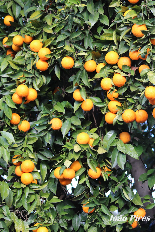 Photograph Vai um sumo de laranja? by João Pires on 500px