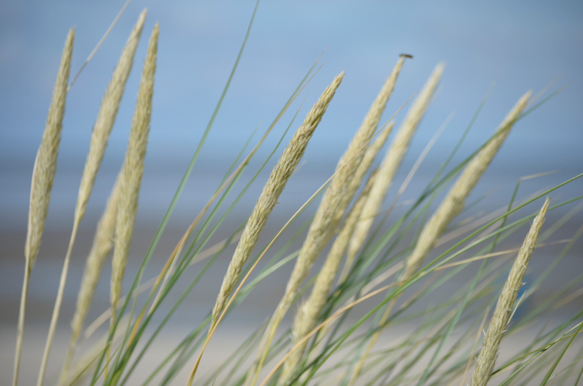 Photograph Seegrass by MM-Click  on 500px