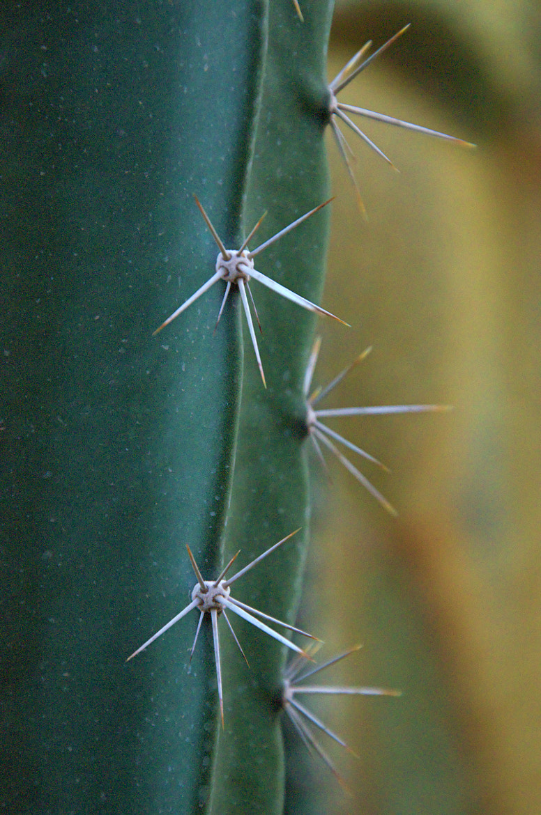 Photograph Cactus by Julien  on 500px