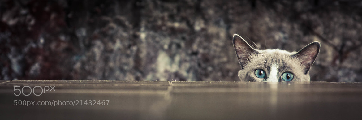 Photograph Soon cat by Thaís Bristot on 500px