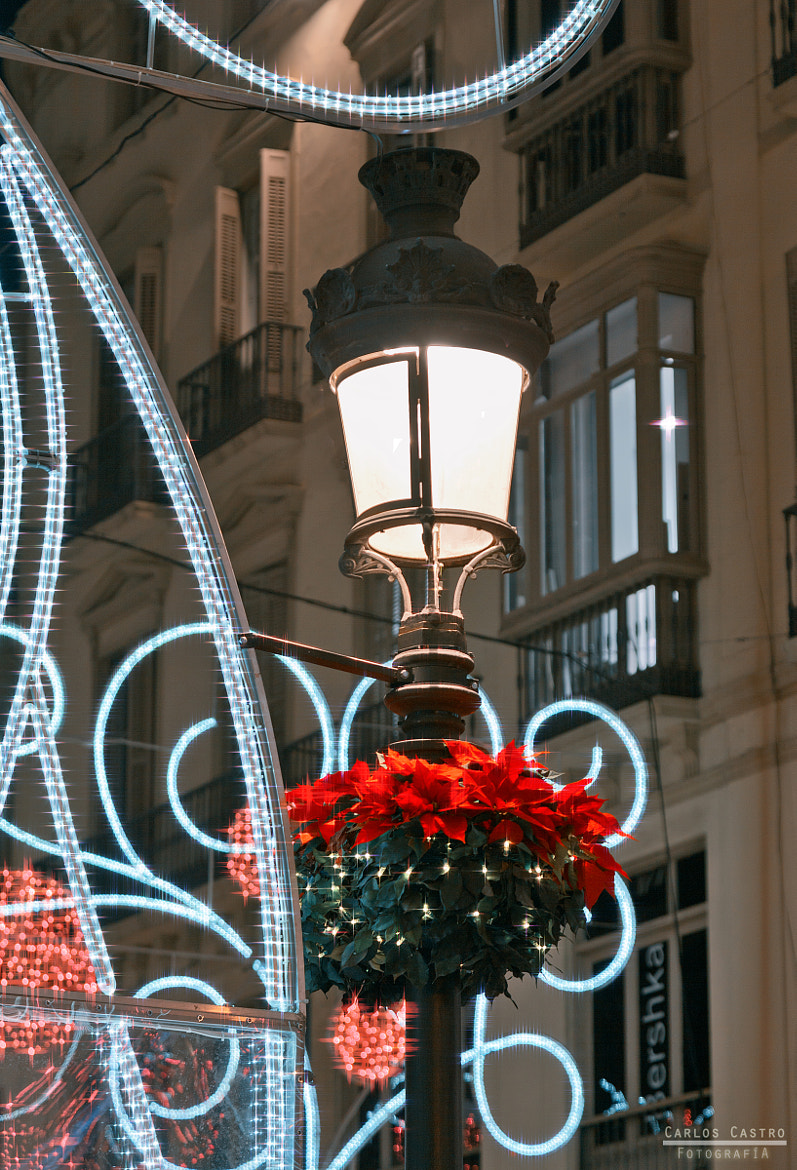 Photograph Lights of Christmas by Carlos Castro Garcia on 500px