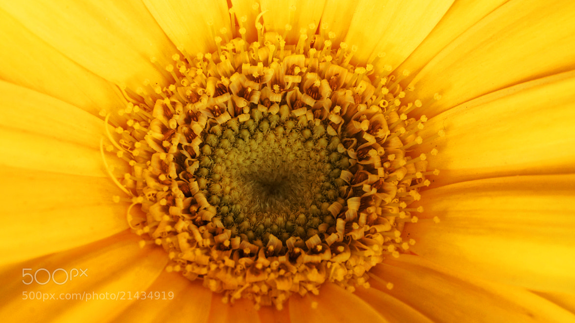 Photograph A yellow flower.... by Lluís Grau on 500px