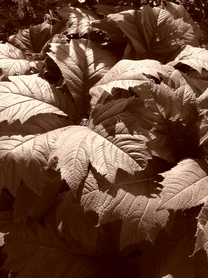 Photograph shady leaves by Marion Hartmann on 500px