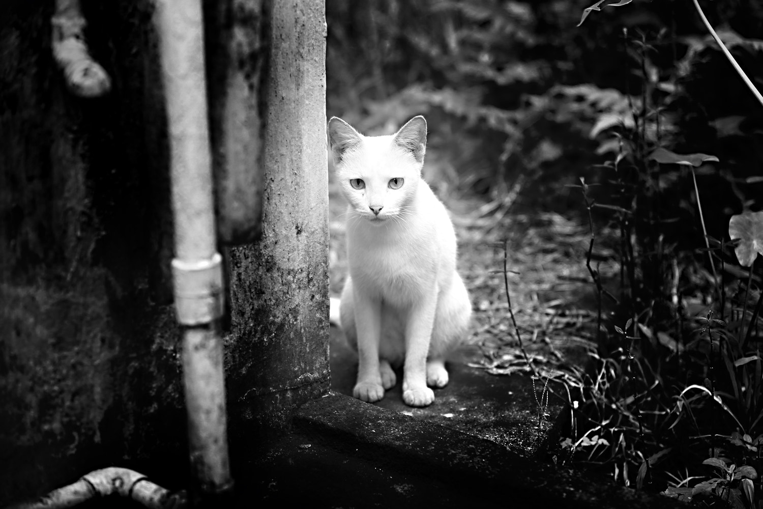 Photograph cat by KANNAN PHOTOGRAPHY on 500px
