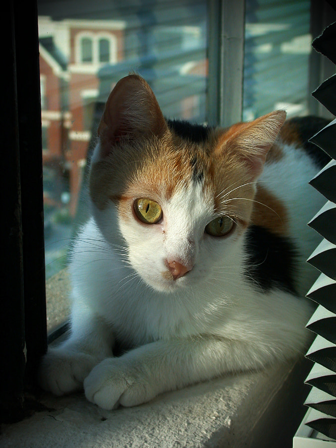 City Cat in a Loft Window