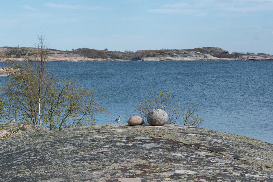 Bird and Stones in Archipelago
