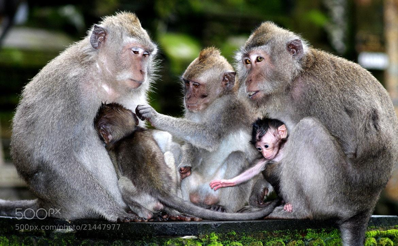 Photograph monkey3 by HH Tan on 500px