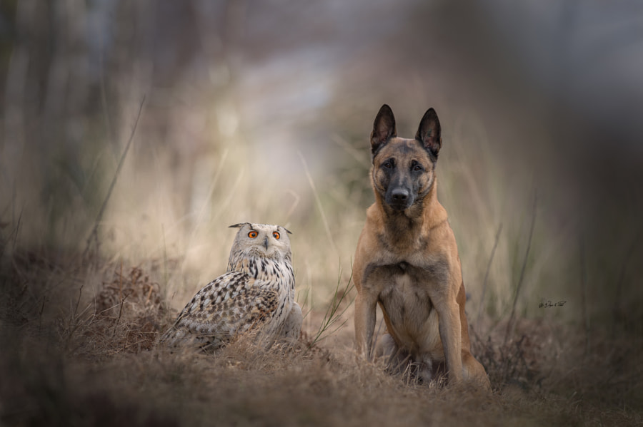 Feelings by Tanja Brandt on 500px.com