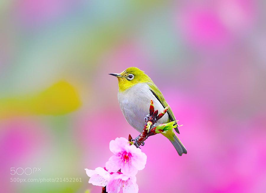 Photograph { White Eye } by Dajan Chiou on 500px