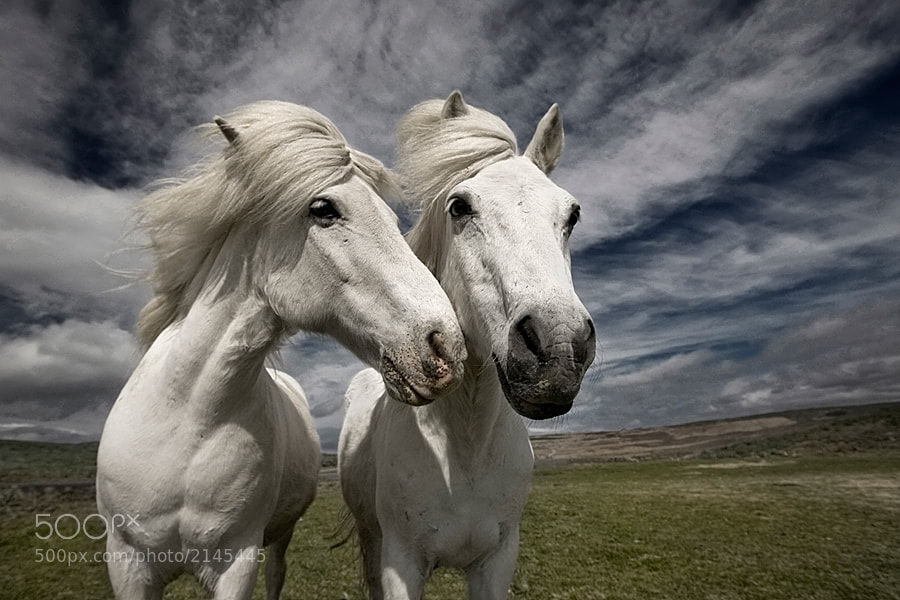 Photograph Inseparables by Brin . on 500px
