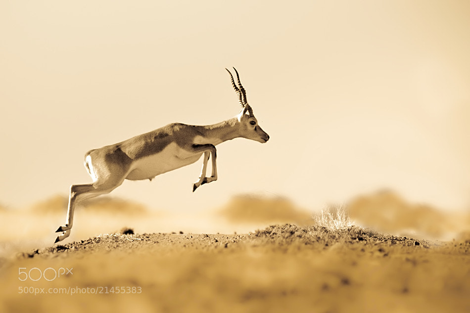 Photograph Jump by Nitin  Prabhudesai on 500px