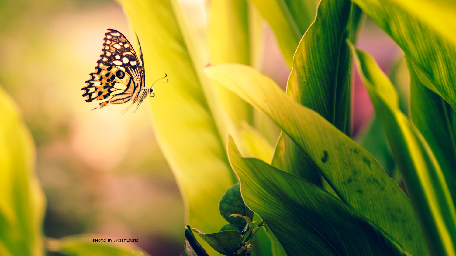 Photograph Fly by Peerasith Chaisanit on 500px