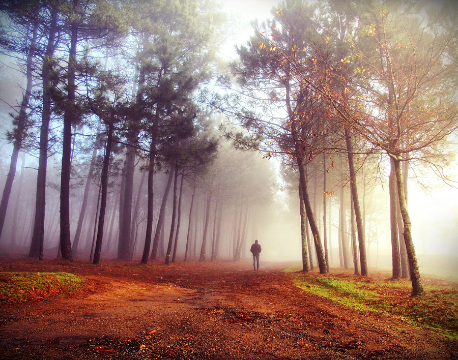 The morning colors by Guillermo  Carballa on 500px.com