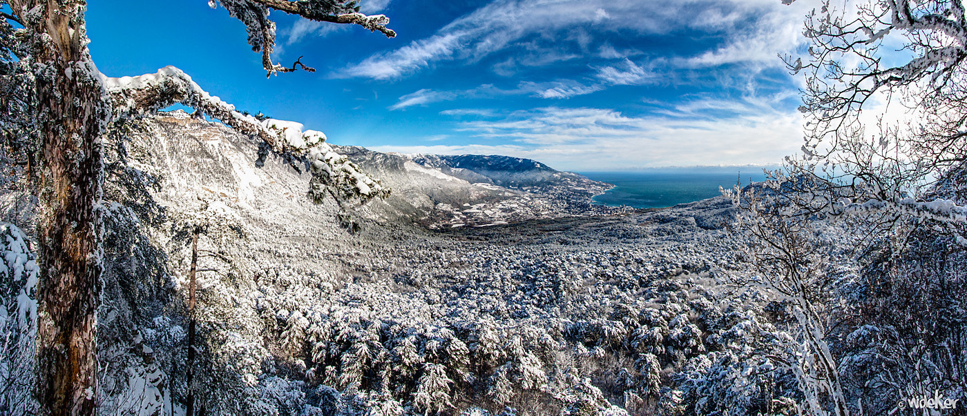 Photograph Crimea, Yalta, Silver arbor. by Svyat Aleksandrovych on 500px