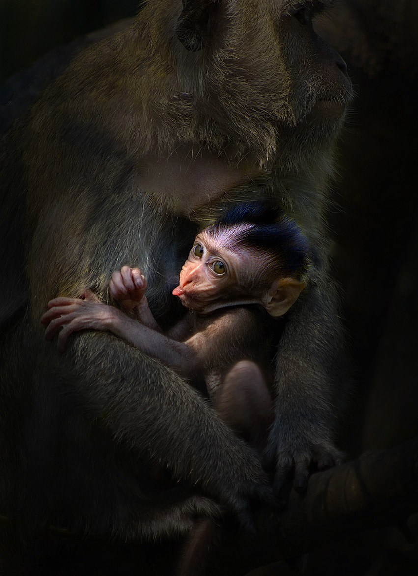 Photograph In mama's arms by Saelanwangsa  on 500px