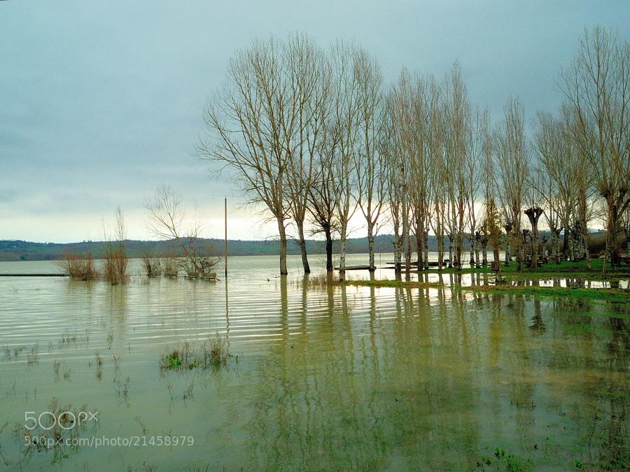 Lake of Chiusi.
