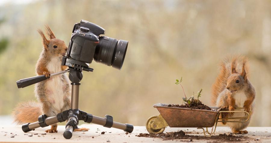 squirrels photo shoot, автор — Geert Weggen на 500px.com
