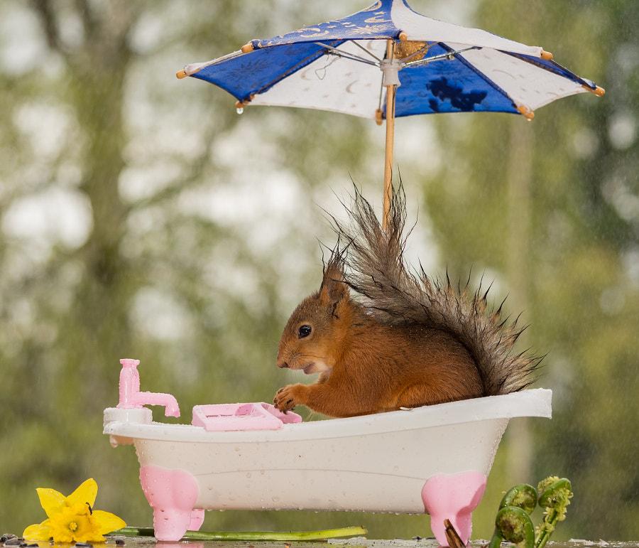 time for a bath, автор — Geert Weggen на 500px.com