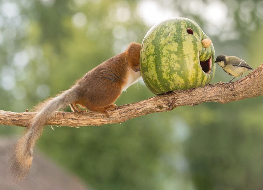 with head in a watermelon, автор — Geert Weggen на 500px.com