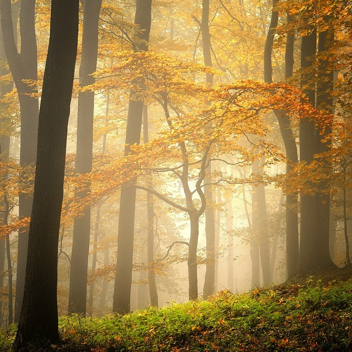 Photograph AUTUMN IN FOREST by TOMÁŠ MORKES on 500px