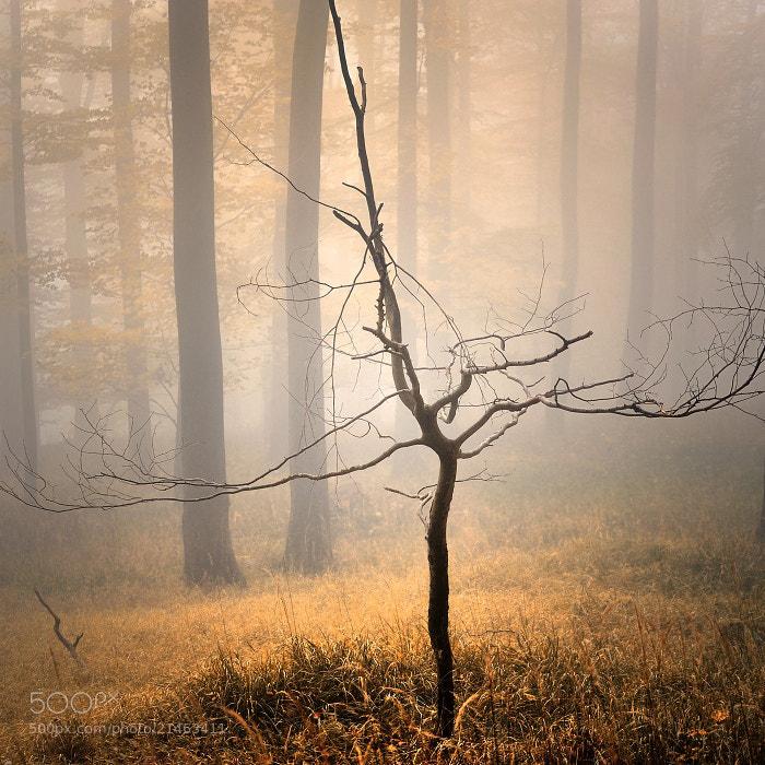 Photograph AUTUMN by Tomáš Morkes on 500px