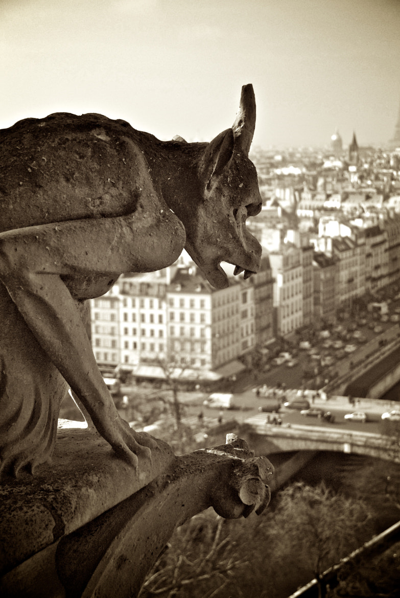 Photograph Notre Dame, Paris, 2011 by Barrie Nightingale on 500px