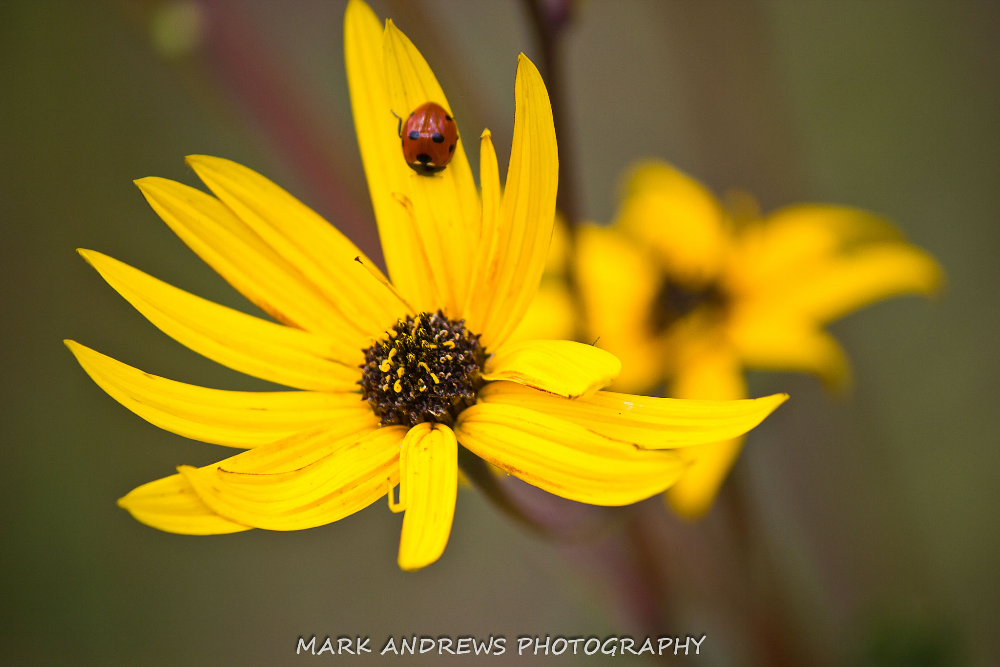 Photograph Lady Bug  by Mark Andrews on 500px