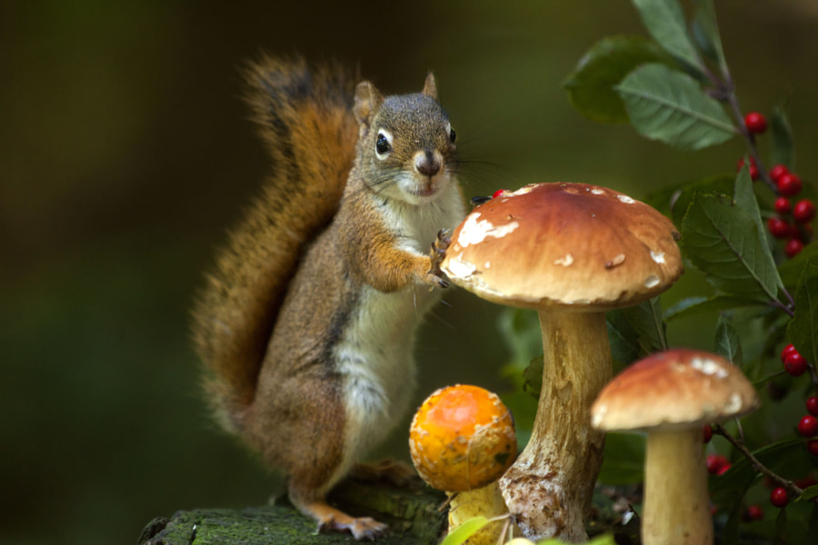Nature photograph This boletus is edible by nature photographer Andre Villeneuve on 500px.com