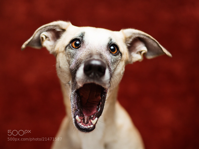 Photograph Vinceeeeeròòòòòòò by Elke Vogelsang on 500px