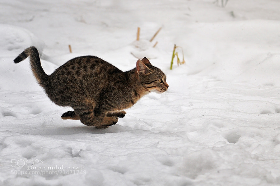 Photograph Catch me if you can by Zoran Milutinovic on 500px