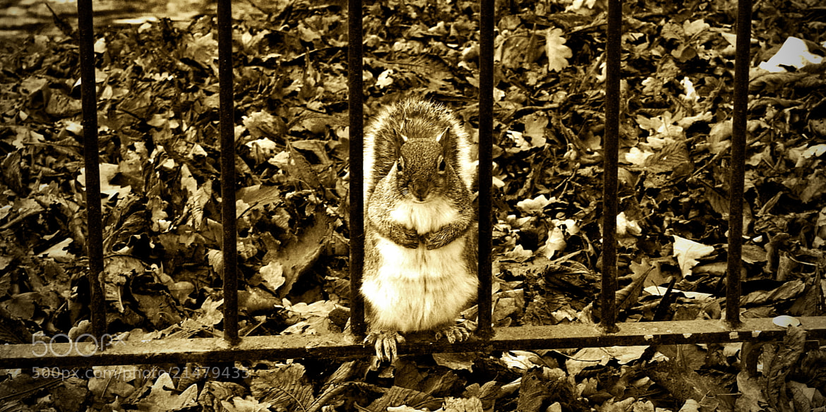 Photograph Behind bars squirrel by Kol Tregaskes on 500px