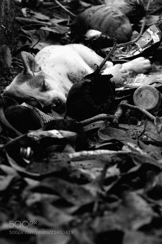 Photograph Homeless little puppy by Rayyan Razali on 500px