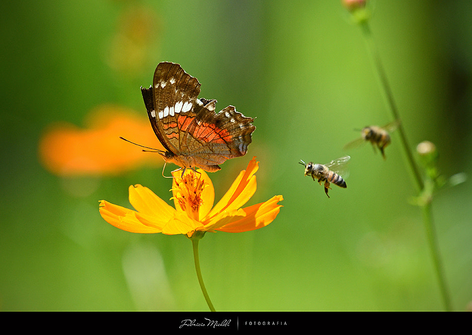 Photograph The bees are coming by Fabricio Micheli on 500px