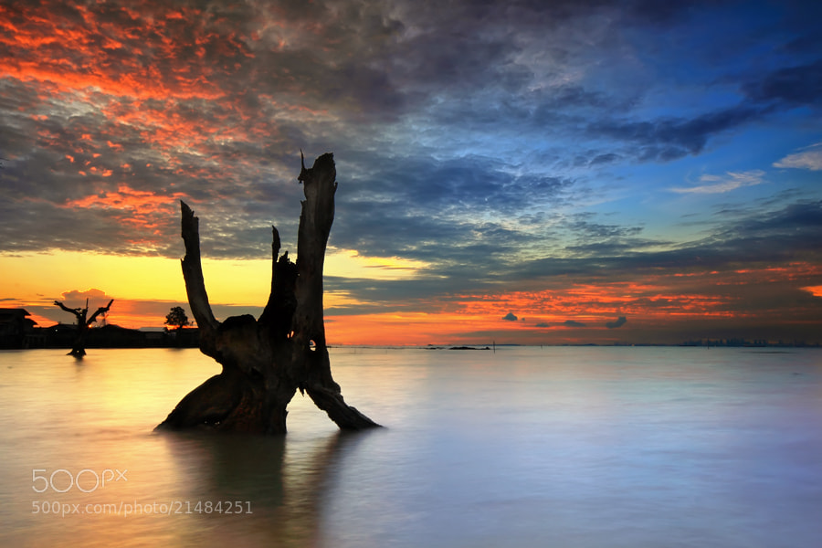 Photograph Blackwood by Danis Suma Wijaya on 500px
