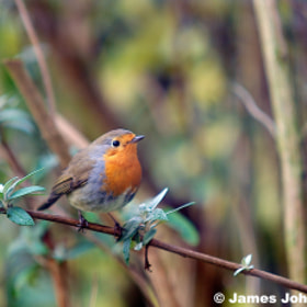 Robin by James Johnson (JamesJohnson)) on 500px.com