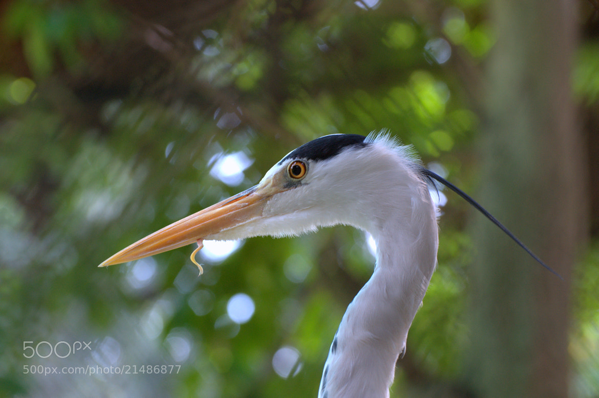 Photograph Crane & Lunch by Jyothy Das on 500px