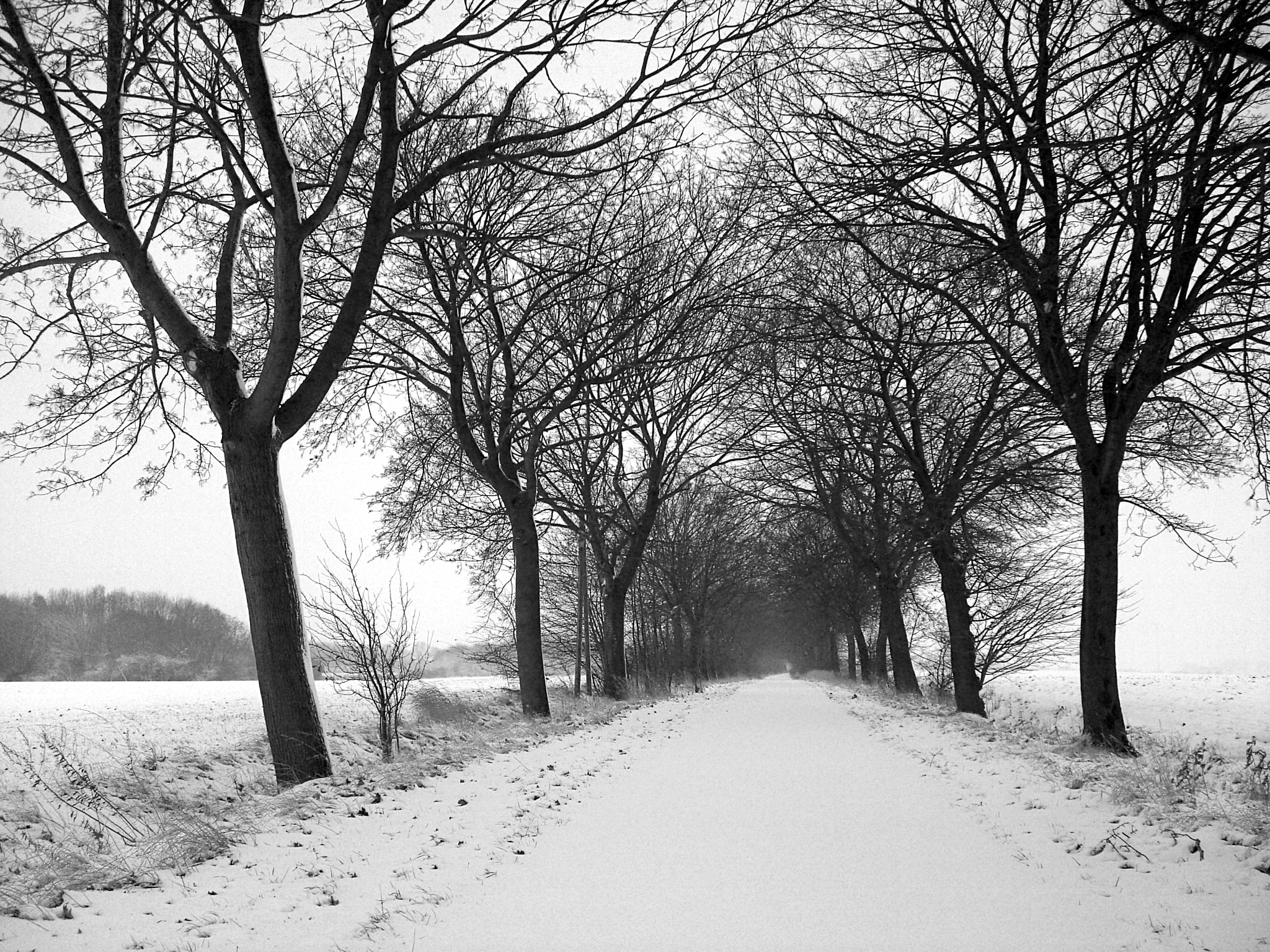 Photograph snow by Tim  Taylor on 500px