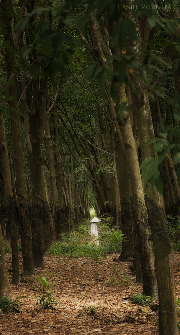 Photograph Forest by Daniel Montalbán on 500px