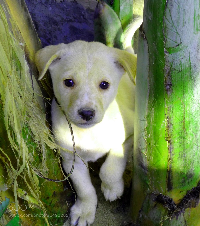 Photograph Puppy Pie by Ravi Shankar on 500px