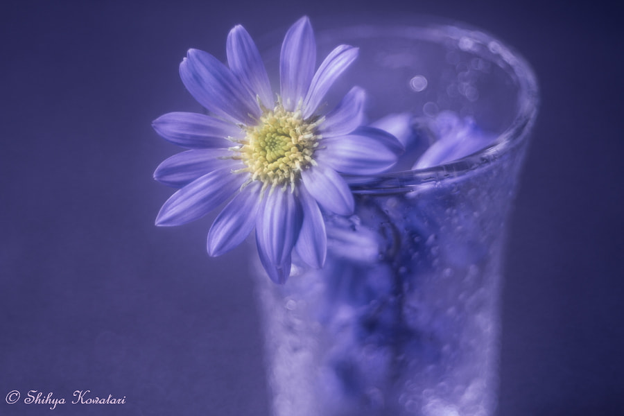 Ballad For Late Spring by Shihya Kowatari on 500px.com