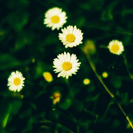 Little cute flowers