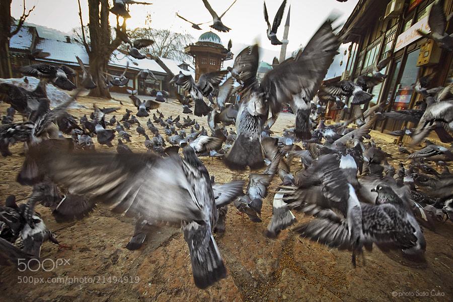 Photograph Untitled by Saša Čuka on 500px