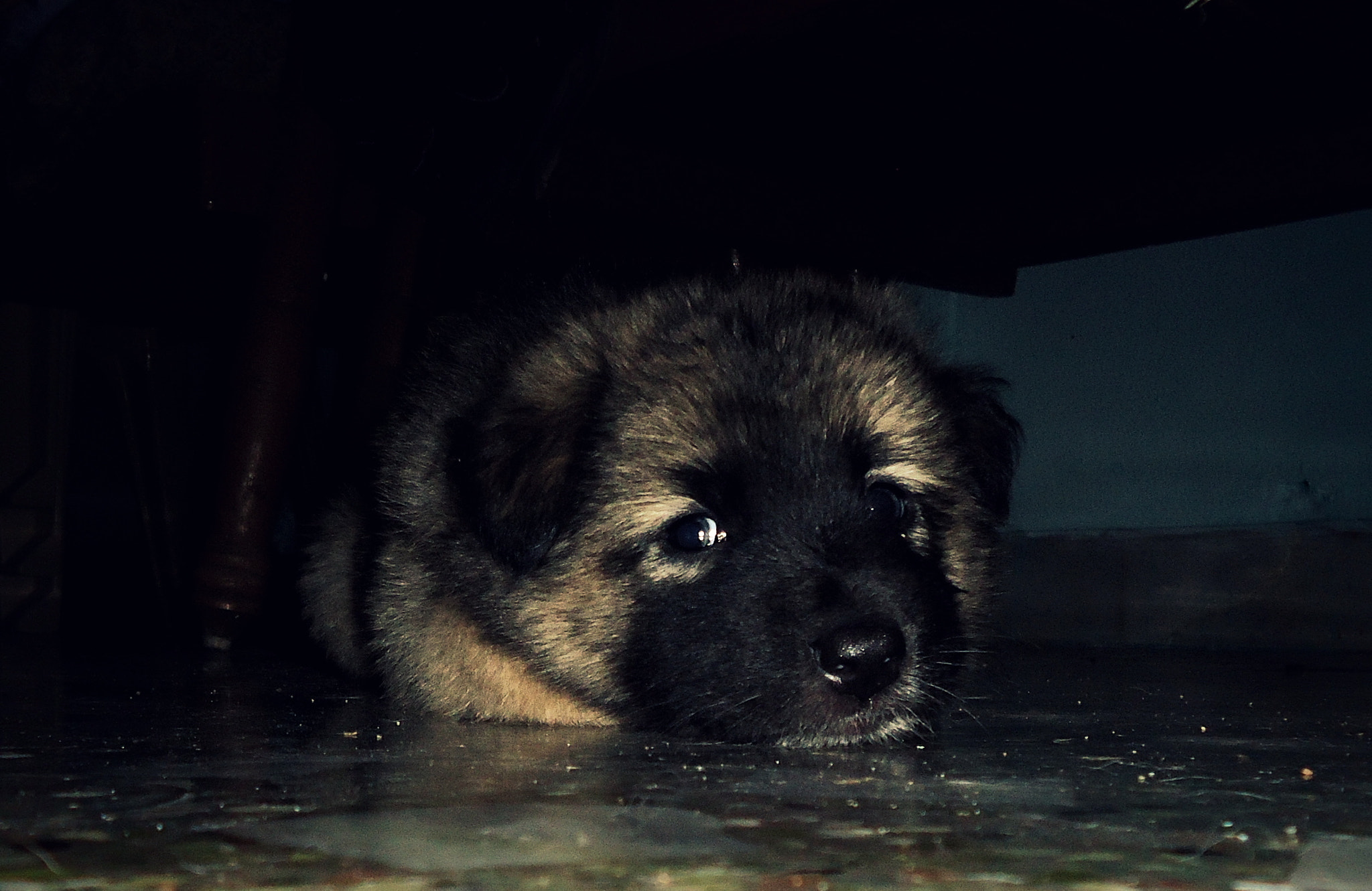 Photograph Pup O_x by Pix tEj on 500px