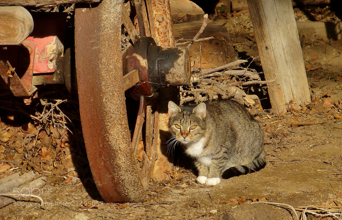 Photograph The cat and the rusty wheel... by Renato Pantini on 500px
