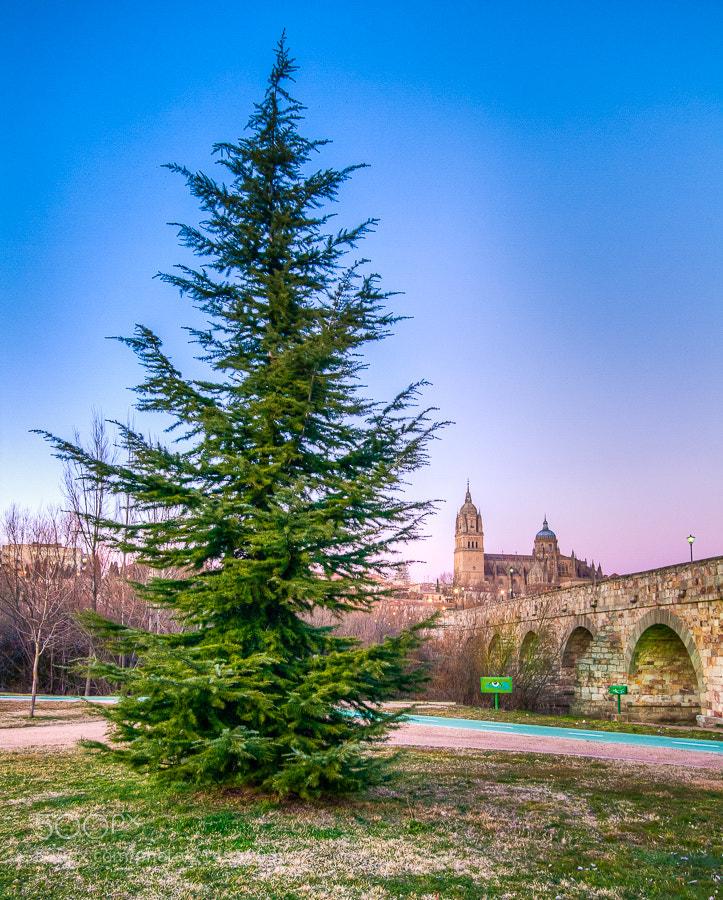 Photograph Catedral desde el Puente Romano by Jose Agudo on 500px