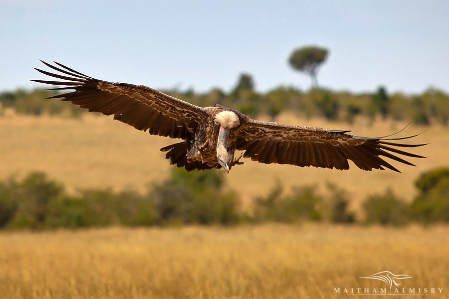 Photograph Landing by Maitham AlMisry on 500px