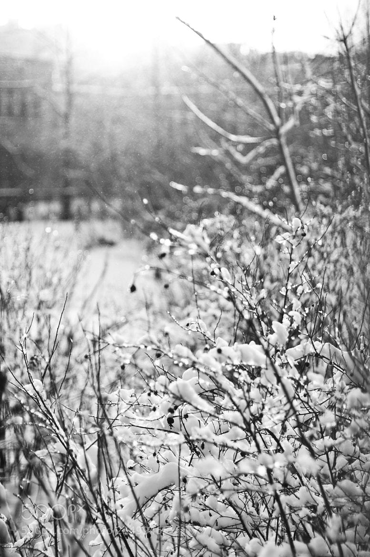 Photograph Winter bushes by Zhanna Semenova on 500px
