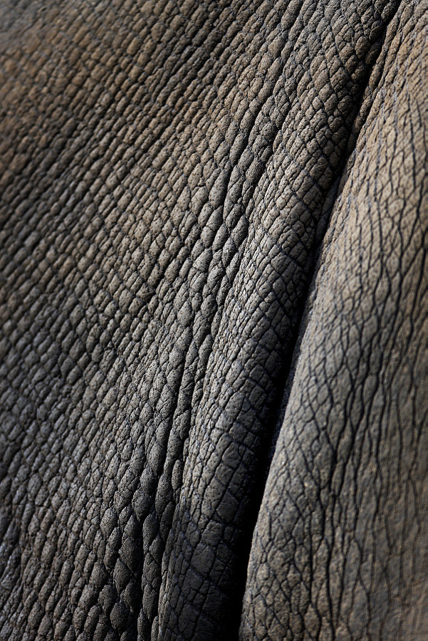 Rhino by Jeroen Putmans on 500px.com